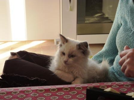 Ella, 4 mois