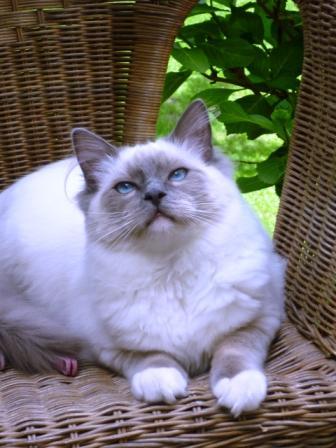 ENZO, frère de Engelle -Juillet 2010