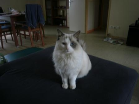 Eva, 1 an