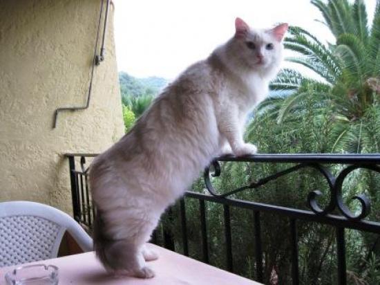 Chipie, 3 ans