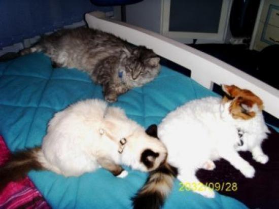 Elia, Doudoum, et Tounette