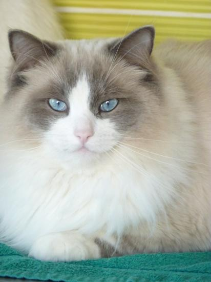 ELLA, 3 ans, bleu bicolore