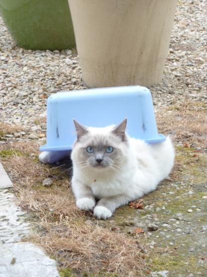 GLITTER, mâle bleu mitted 10 mois