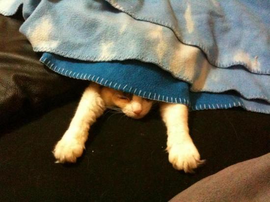 j-aime-dormir-sous-les-couvertures.jpg